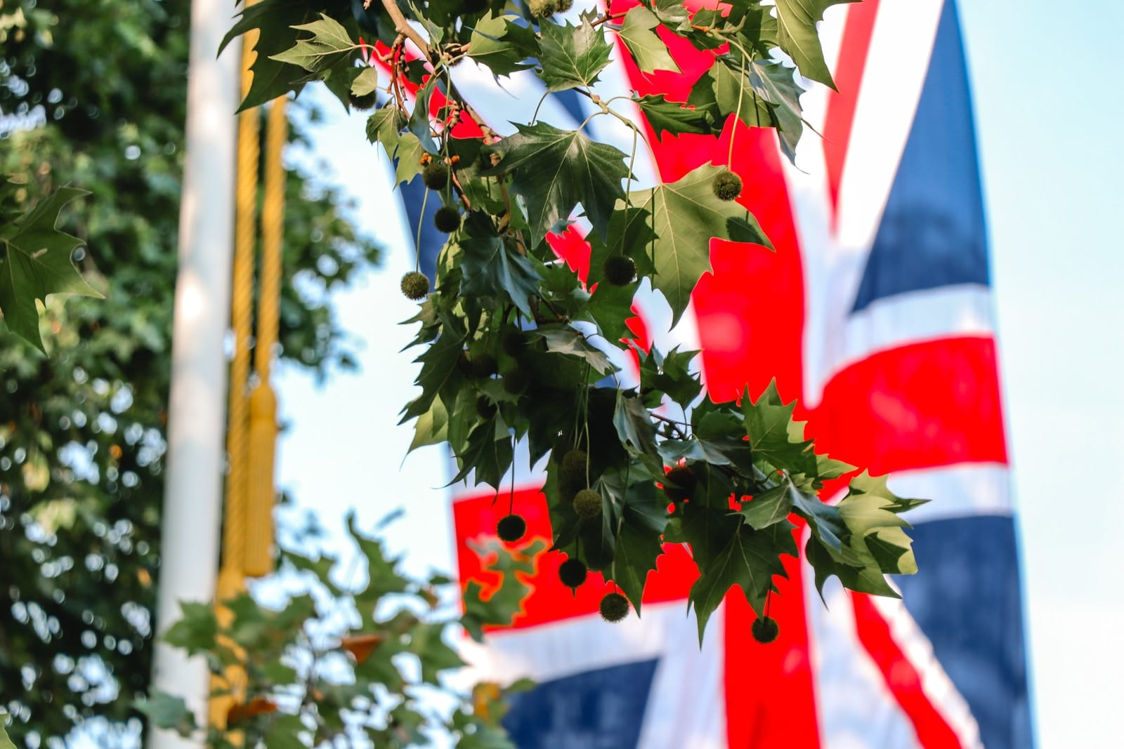 United Kingdom flag near green leaf tree during daytime